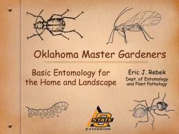 Insects Basics - Tulsa Master Gardeners