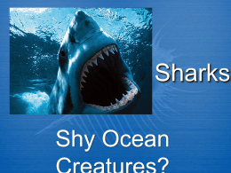 Sharks - Stacy A. Nyikos