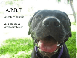 Virtual Pet Behaviorist: The Truth about Pit Bulls