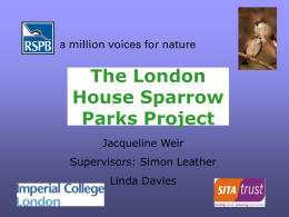 London House Sparrow Parks Project - APRIL