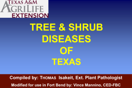 Tree & Shrub Diseases