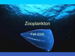 Introduction%20to%20Zooplankton%20Ecology08