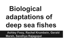 Biological adaptations of deep sea fishes