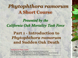 Introduction to Phytophthora ramorum and Sudden Oak Death