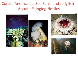 Corals, Anemones, Sea Fans, and Jellyfish