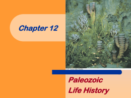 chapter12 Paleozoic