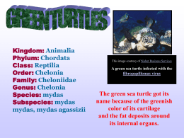 The_Green_Sea_Turtle