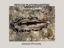 zly 103 platyhelminthes