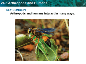 24.5 Arthropods and Humans