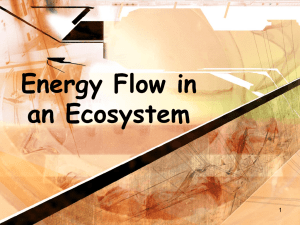 Food Energy through Ecosystems