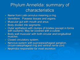 Topic 8 Annelids