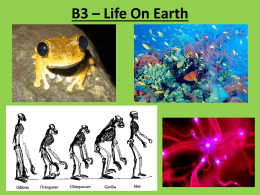 B3 – Life On Earth Food Webs / Competition