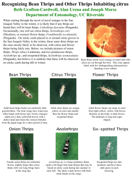 Recognizing Bean Thrips and Other Thrips Inhabiting Citrus