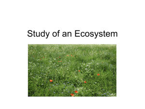 Study of an Ecosystem