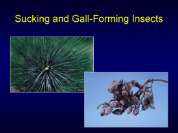 Sucking and Gall Forming Insects
