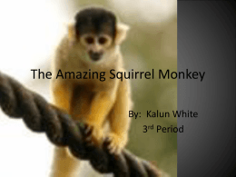 The Amazing Squirrel Monkey