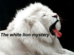 The white lion mystery