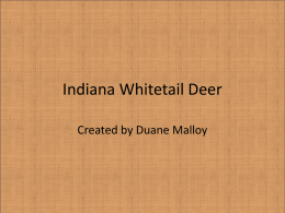 Indiana Whitetail Deer