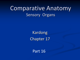 Comparative Anatomy Sensory and Endocrine Organs