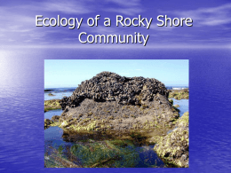 Ecology of a Rocky Shore Community