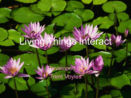 Living Things Interact