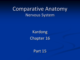 Comparative Anatomy Nervous System