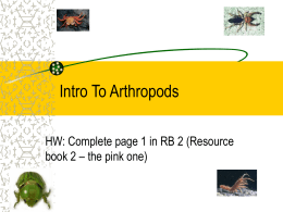 Intro To Arthropods