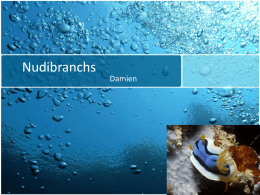 Nudibranchs- Powerpoint