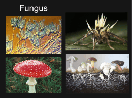 Fungi - How Biology Works