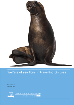 Welfare of sea lions in travelling circuses