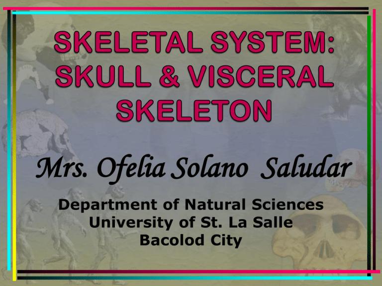 Ridge skull the reptilian Temporal bone