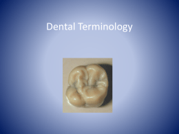 Dental_Terminology_P..