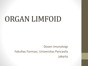 ORGAN LIMFOID