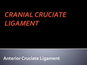 CRANIAL CRUCIATE LIGAMENT - Stage Road Animal Hospital