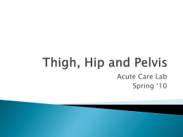 Chapter 4- Thigh, Hip and Pelvis