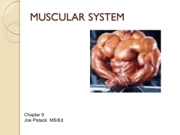 PPT09Chapter9MusclarSystems