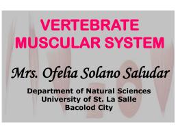 VERTEBRATE MUSCULAR SYSTEM