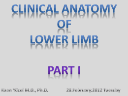 Clinical Anatomy of Lower Limb Part 1