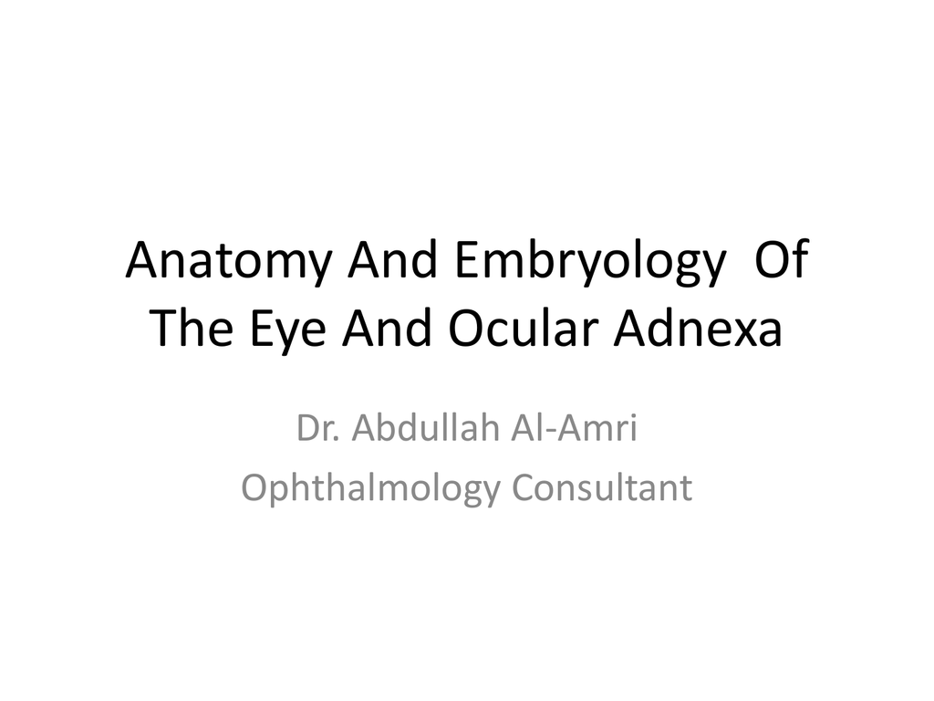 Embryology And Anatomy Of The Eye And Ocular