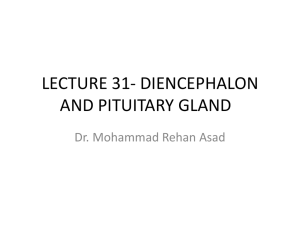 LECTURE 31- DIENCEPHALON AND PITUITARY GLAND