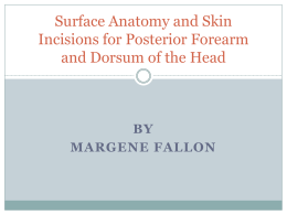 Surface Anatomy and Skin Incisions for Posterior forearm and