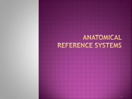 anatomical reference systems