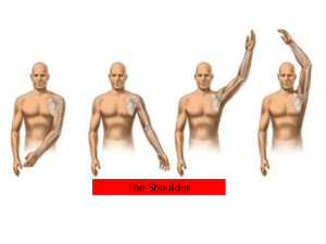 The shoulder - Goodson Parkbury Physiotherapy