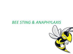 BEE STING & ANAPHYLAXIS Introduction