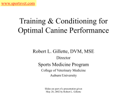 Training & Conditioning for Optimal Canine