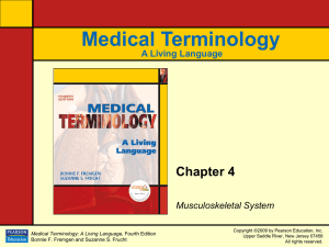 Chapter 4: Musculoskeletal System