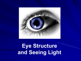 Eye Structure and Seeing Light Presentation