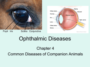 Ophthalmic Diseases - Catherine Huff`s Site
