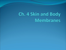 Ch. 4 Skin and Body Membranes