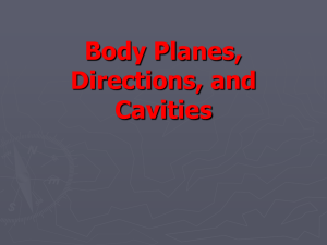 TPJ 3C1 Body Planes, Directions, and Cavities